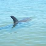Dolphin_Bunbury