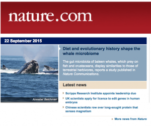 Whale Microbiome paper featured on the Nature Homepage